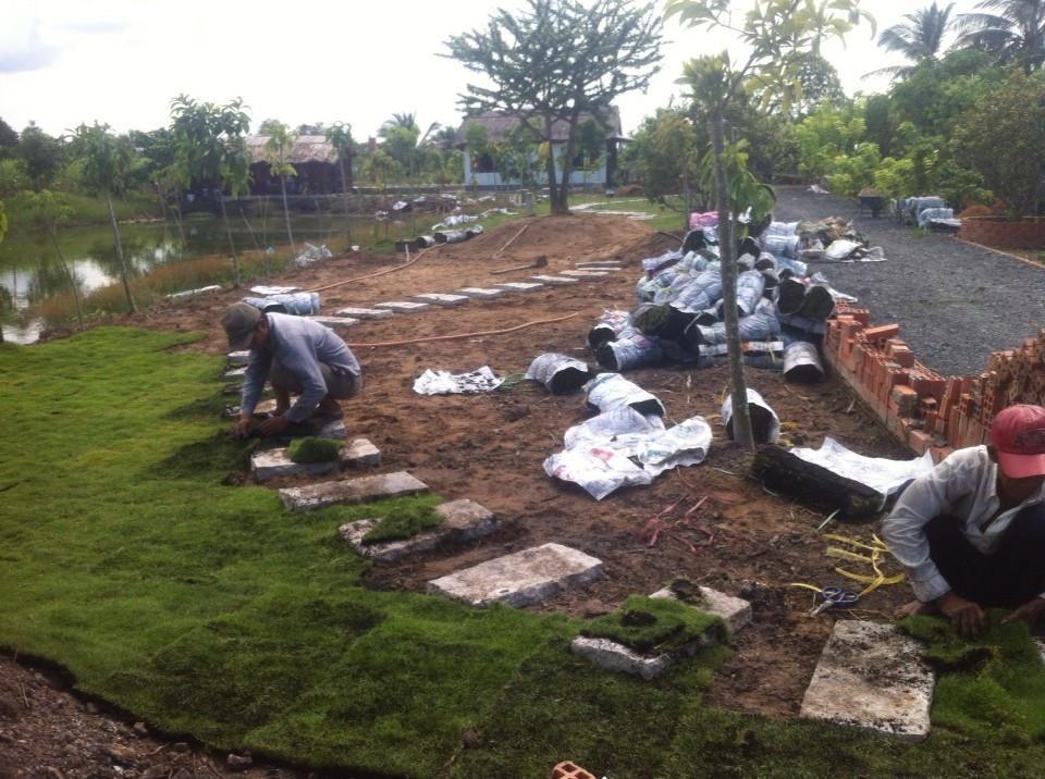 Công ty trồng cỏ lá gừng tại Bình Dương