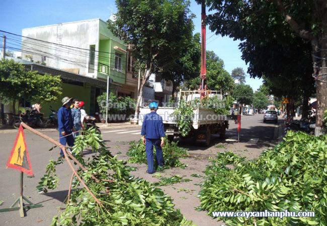 Dịch vụ cắt tỉa cây ở Thủ Dầu Một