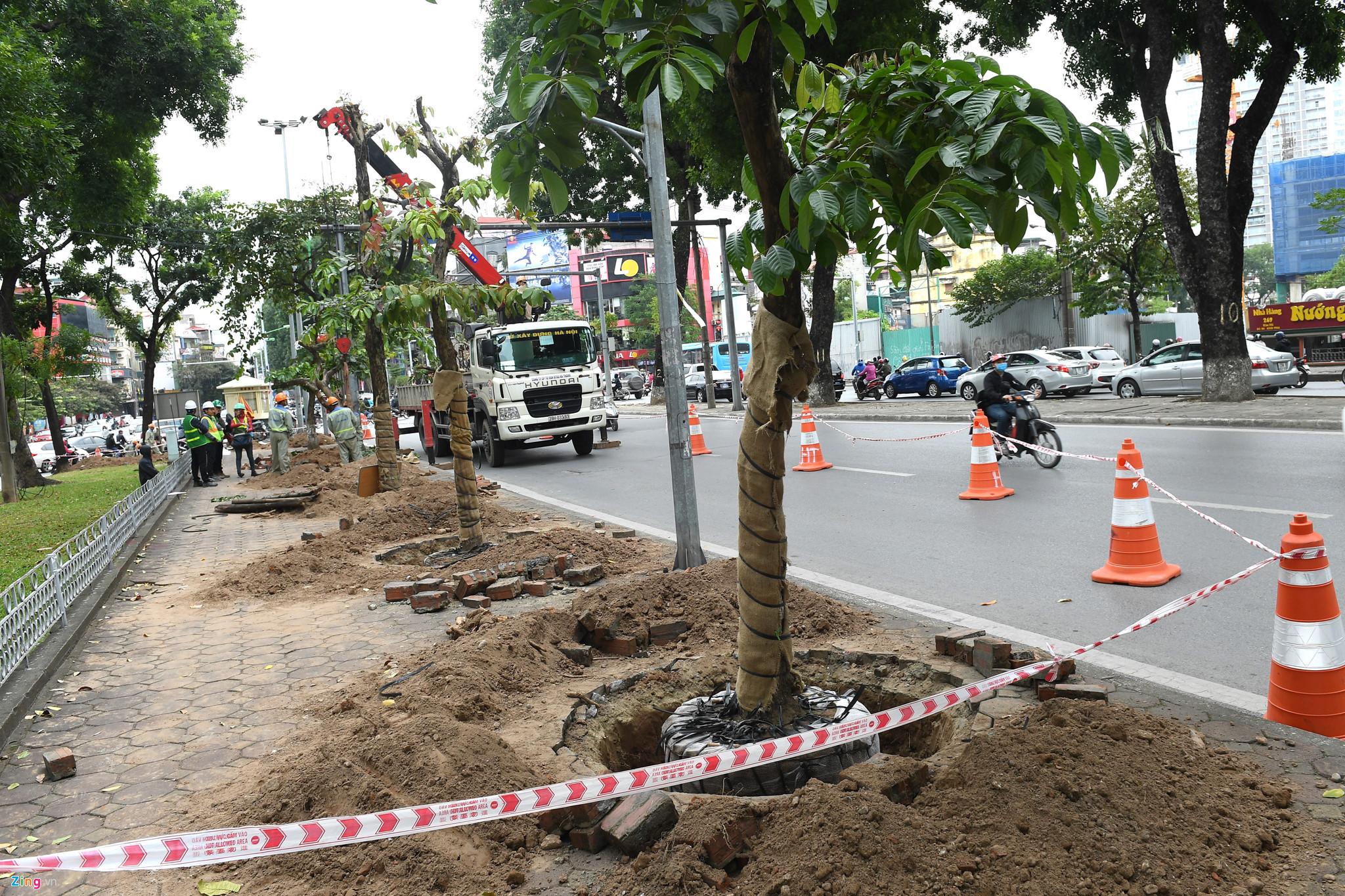 Dịch vụ di dời cây ở Sài Gòn