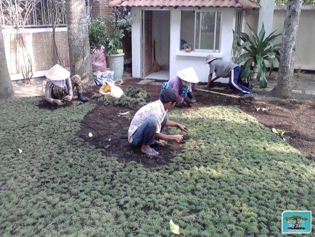 Dịch vụ trồng cỏ ở Bình Dương