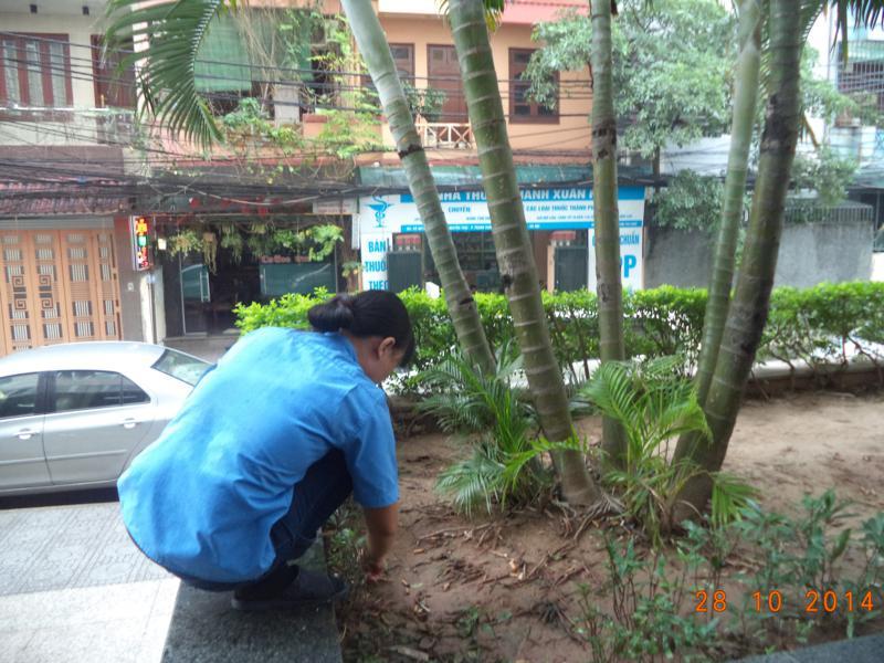 Công ty dịch vụ chăm sóc cây xanh tại Bình Dương