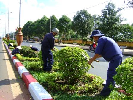 Dịch vụ chăm sóc cây xanh ở HCM