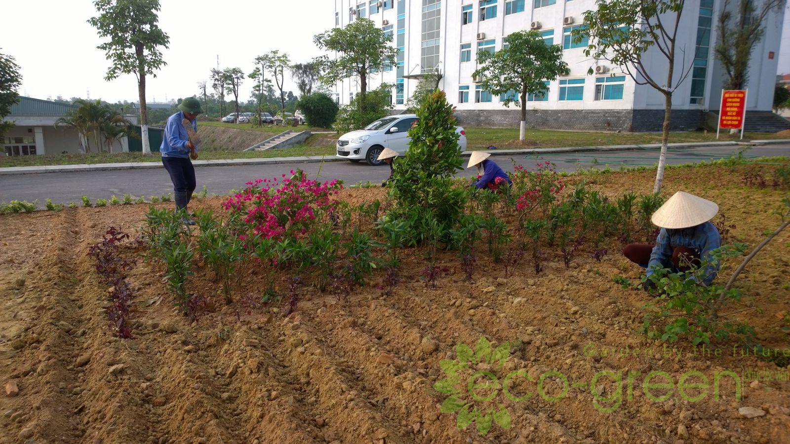 Dịch vụ trồng cây tại Bình Dương