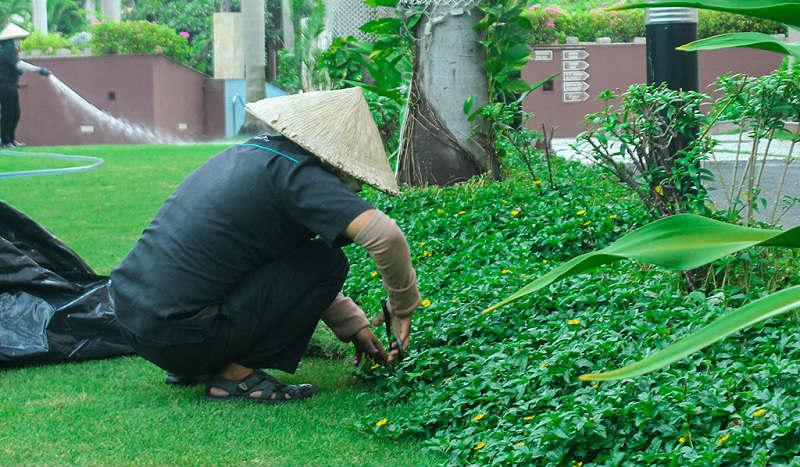 Dịch vụ chăm sóc cây xanh tại Tây Ninh