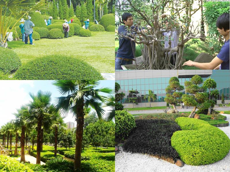 Dịch vụ trồng cây ở Bình Dương