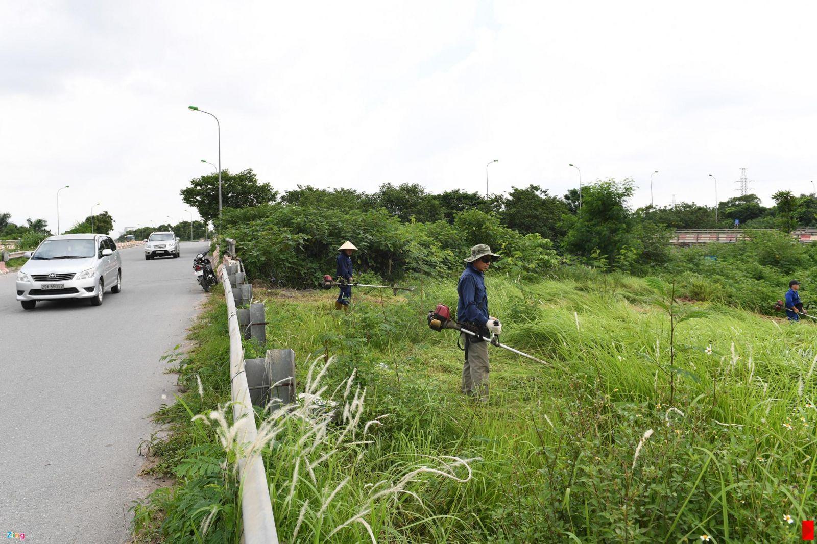 Dịch vụ cắt cỏ ở TPHCM