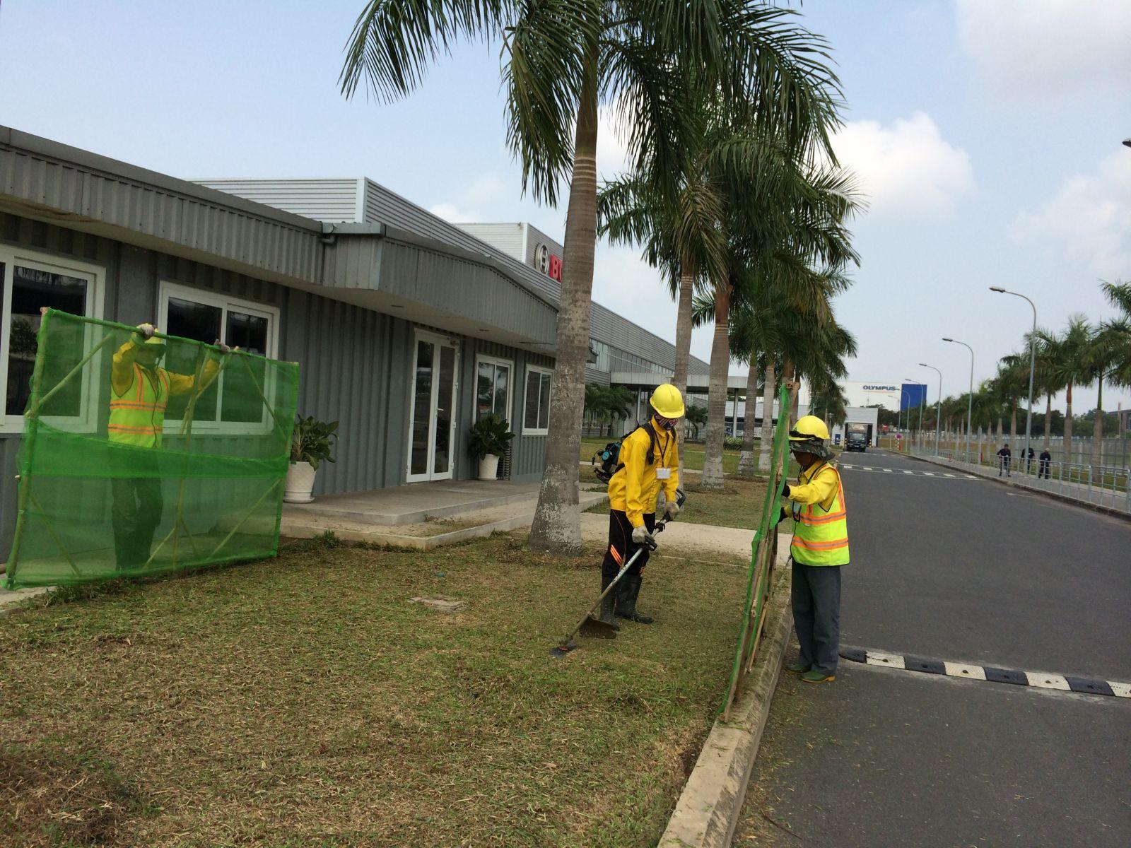 Dịch vụ cắt cỏ tại Bình Dương