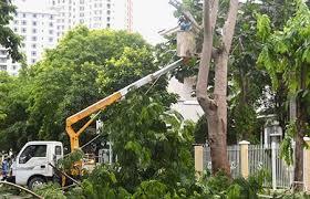 dịch vụ cắt tỉa cây xanh tại Bình dương