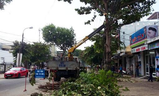 Dịch vụ cắt tỉa cây xanh ở TP HCM