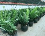 Dịch vụ chăm sóc cây xanh Tại Bình Dương | Cây cảnh| Sân vườn | Bảo Dưỡng.