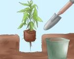 Dịch vụ cây xanh tại Bình Dương | Công ty cây xanh tại Bình Dương