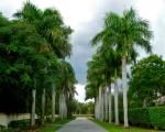 Dịch vụ chăm sóc cây xanh ở Bình Dương | Công ty cây xanh Bình Dương