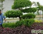 Dịch vụ chăm sóc cây xanh tại Tp Hồ Chí Minh | Công ty cây xanh
