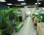 Dịch vụ chăm sóc cây xanh tại Bình Dương | TP Hồ Chí Minh