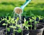 Dịch vụ trồng cây công trình tại Bình Dương | Dịch vụ cung cấp cây