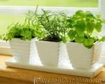Công ty dịch vụ trồng cỏ tại Bình Dương | Cung cấp cỏ các loại