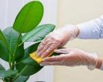 Dịch vụ chăm sóc cây tại Bình Dương | Cung cấp dịch vụ cây xanh