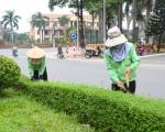 Công ty cây xanh tại Bình Dương | Chăm sóc cây xanh tại Bình Dương
