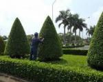 Dịch vụ chăm sóc cây cảnh tại TP HCM | Công ty cây xanh
