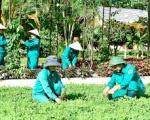 Dịch vụ trồng cỏ ở Bình Dương | Dịch vụ trồng cỏ tại Tây Ninh