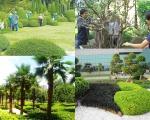Công ty cây xanh tại Bình Dương | Chăm sóc cây xanh