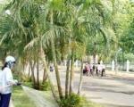 Chăm sóc cây xanh Bình Dương | Chăm sóc cảnh quan
