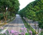 Công ty dịch vụ chăm sóc cây xanh tại Bình Dương | Dịch vụ cây xanh