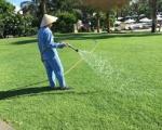 Dịch vụ trồng cỏ tại Bình Dương | Cỏ Nhung